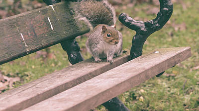 Photograph - Grey Squirrel In Autumn Park K by Jacek Wojnarowski
