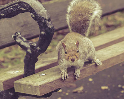 Photograph - Grey Squirrel In Autumn Park L by Jacek Wojnarowski