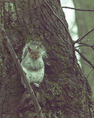 Photograph - Grey Squirrel In Autumn Park N by Jacek Wojnarowski