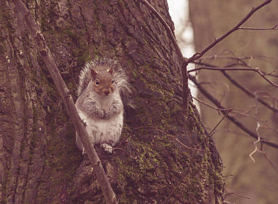 Photograph - Grey Squirrel In Autumn Park O by Jacek Wojnarowski