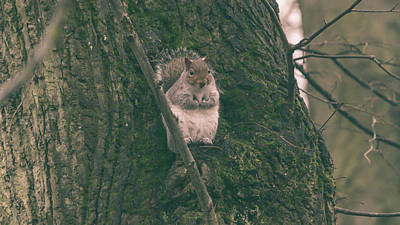 Photograph - Grey Squirrel In Autumn Park P by Jacek Wojnarowski