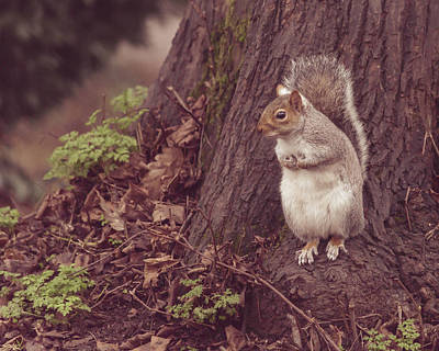 Photograph - Grey Squirrel In Autumn Park Q by Jacek Wojnarowski
