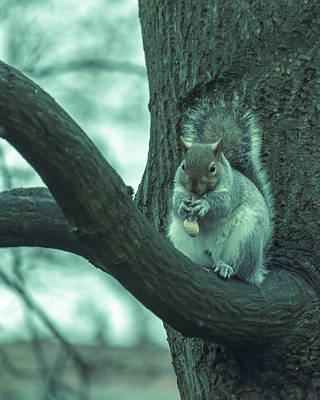 Photograph - Grey Squirrel In Autumn Park S by Jacek Wojnarowski