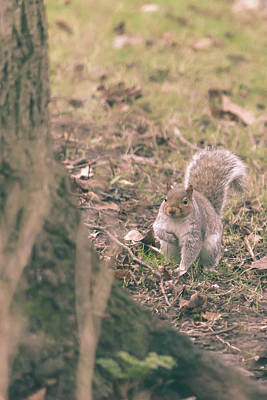 Photograph - Grey Squirrel In Autumn Park V by Jacek Wojnarowski