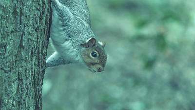 Photograph - Grey Squirrel In Autumn Park W by Jacek Wojnarowski