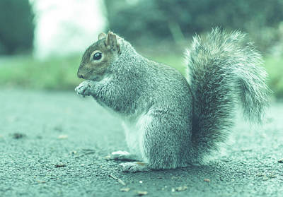 Photograph - Grey Squirrel In Autumn Park Y by Jacek Wojnarowski