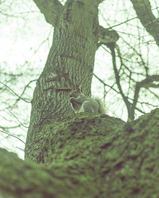 Photograph - Grey Squirrel In Autumn Park Z by Jacek Wojnarowski