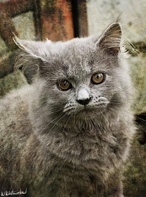 Photograph - Grey Turkish Angora Cat by Weston Westmoreland