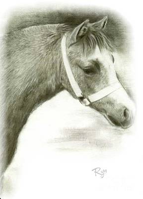 Grey Welsh Pony  Art Print
