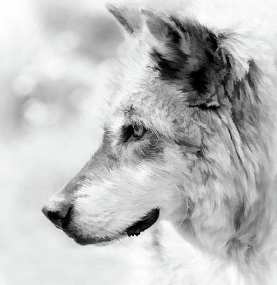 Photograph - Grey Wolf Close Up by Athena Mckinzie