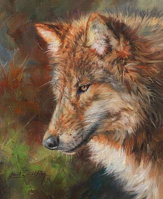 Painting - Grey Wolf Face by David Stribbling