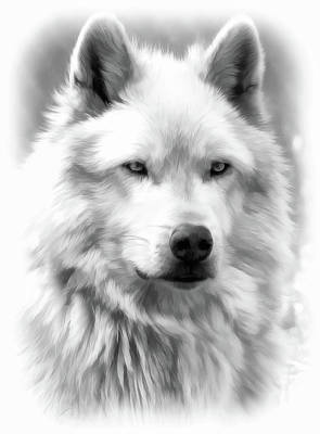 Photograph - Grey Wolf Portrait Bw by Athena Mckinzie