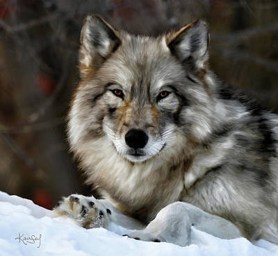 Digital Art - Grey Wolf Portrait by Johanne Dauphinais