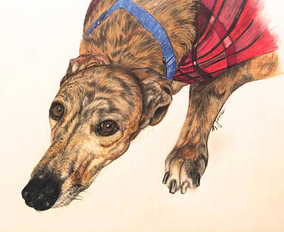 Brindle Drawing - Greyhound In Coat by Karen Janelle
