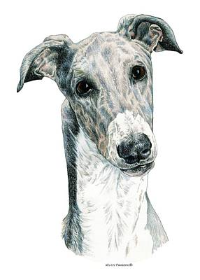 Dog Race Track Drawing - Greyhound by Kathleen Sepulveda