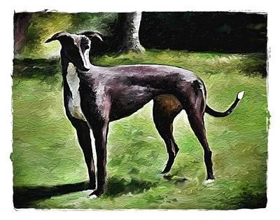 Greyt Digital Art - Greyhound Oneco Marie by Terry Mulligan