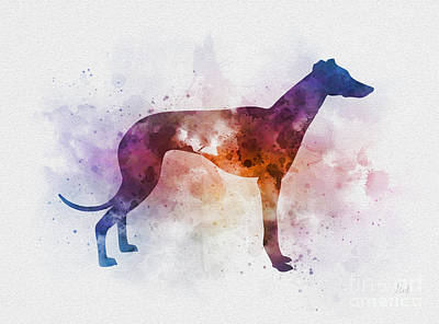 Mixed Media - Greyhound by Rebecca Jenkins