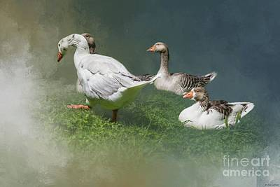 Photograph - Greylag Geese by Eva Lechner