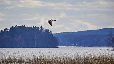 Photograph - Greylag Goose Evening Flight by Jouko Lehto