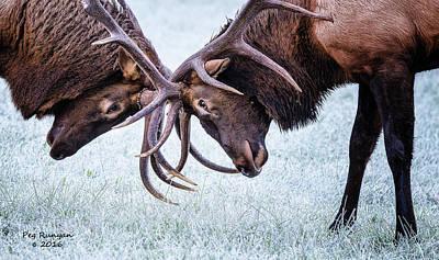 Photograph - Gridlock by Peg Runyan