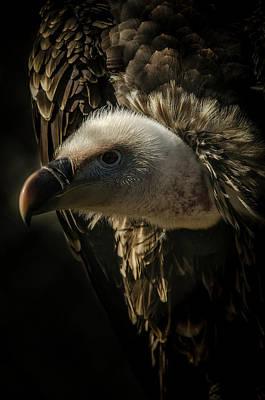 Photograph - Griffon Vulture by Darren Wilkes