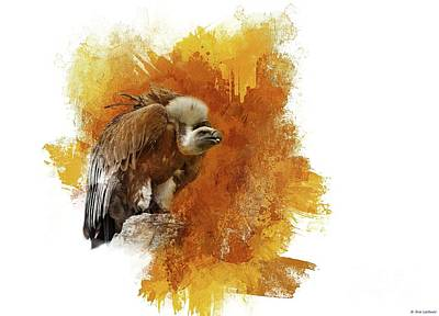 Vulture Mixed Media - Griffon Vulture by Eva Lechner