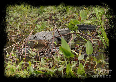 Photograph - Grinning Gator With Border by Carol Groenen