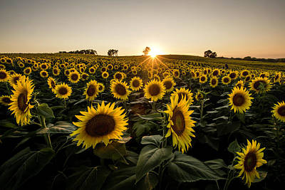 Grinter Farms Sunset 3 Art Print by Chris Harris