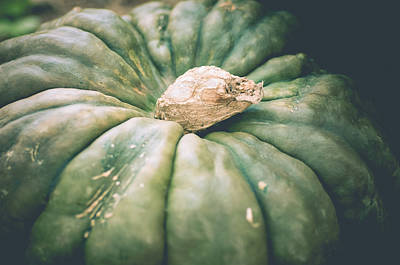 Photograph - Grizzled Gourd by Christi Kraft