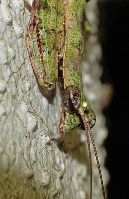 Photograph - Grizzled Mantis by Larah McElroy