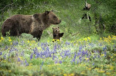 Mammals Photograph - Grizzlies In Pilgrim Creek by Wildlife Fine Art