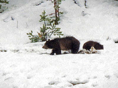 Yellowstone Digital Art - Grizzlies In The Snow by Jayne Wilson