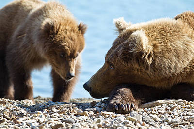 Caring Mother Photograph - Grizzly And Cub by Brandon Broderick