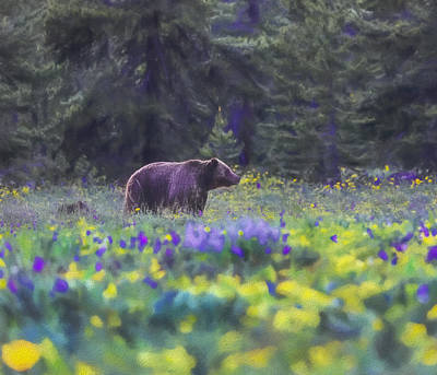 Teton Mixed Media - Grizzly And Cub In Spring Flowers by Dan Sproul