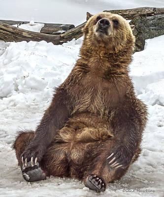 Angels And Cherubs - Grizzly Bear Cub  by Diane Hawkins