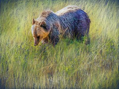 Digital Art - Grizzly Bear Eating Huckleberries. by Rusty R Smith