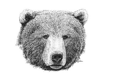 Yellowstone Drawing - Grizzly Bear by George Bumann