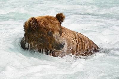 Nature Of Bear. Nature Of Bear In Water.grizzly Photograph - Grizzly Bear In The Falls by Patricia Twardzik