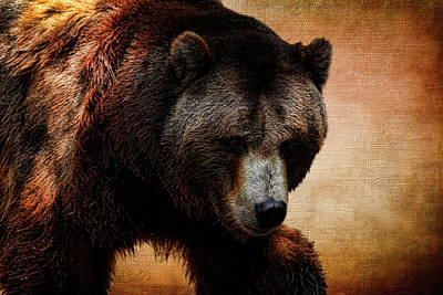 Grizzly Bear Art Print