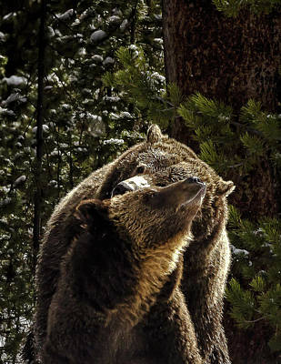 Photograph - Grizzly Bear Love by Bruce J Barker