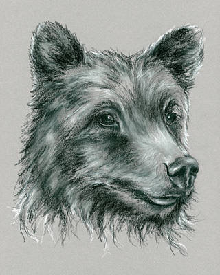 North American Wildlife Drawing - Grizzly Bear by MM Anderson