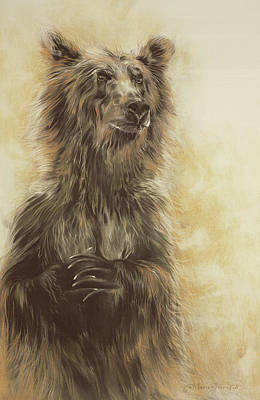 Brown Bear Drawing - Grizzly Bear by Odile Kidd
