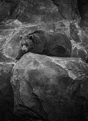 Photograph - Grizzly Bear Relaxing On A Cliff by Ray Van Gundy