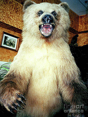 Photograph - Grizzly Bear Taxidermy - Anchorge Alaska by Merton Allen