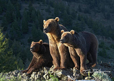 Photograph - Grizzly Bear With Cubs by Tim Fitzharris