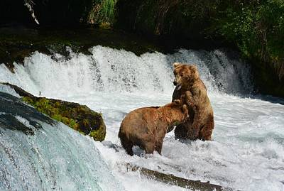 Photograph - Grizzly Bears Fighting At The Falls by Patricia Twardzik