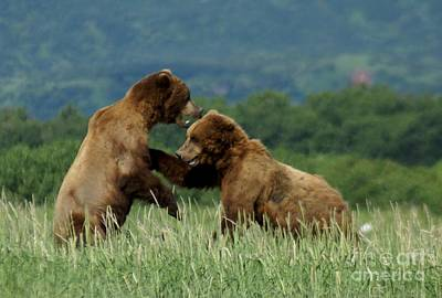 Photograph - Grizzly Bears Fighting by Patricia Twardzik