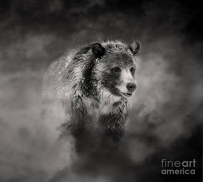 Photograph - Grizzly Black And White In Clouds by Clare VanderVeen