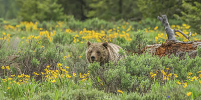 Photograph - Grizzly Blondie by Yeates Photography