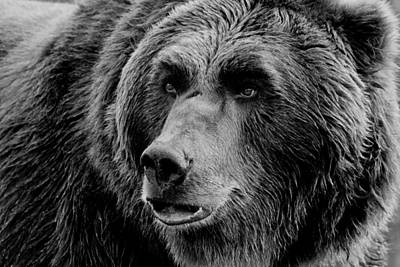 Outdoor Graphic Tees - Grizzly Close Up BW by Athena Mckinzie